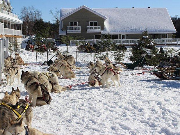 Pourvoirie du Lac Blanc traineau à chien